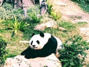 おすすめ!マカオのジャイアントパンダ館は癒しの動物天国